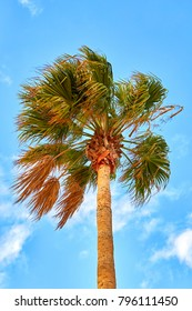 Palm tree on blue sky background, Spain