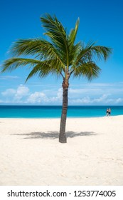 Palm Tree on a Caribbean Beach
