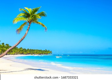 Palm tree on the caribbean tropical beach. Saona Island, Dominican Republic. Vacation travel background