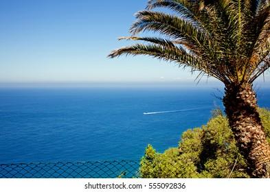 Palm Tree on the Edge of the World Atlantic Ocean Gibraltar Strait Skyline Cap Spartel