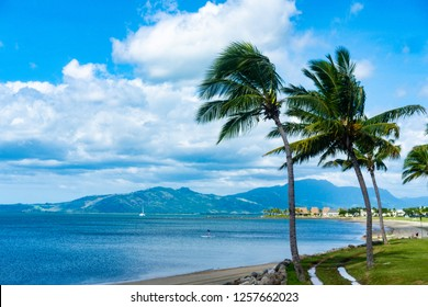 Palm Tree on Fiji Island Beach in Denarau, Nadi.