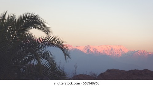Palm tree on the front and snow peaks of Andes Mountains on the background at sunset in Santiago, Chile. Weather forecast contrast landscape concept
