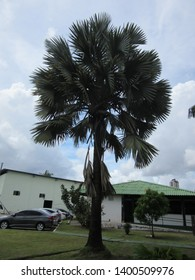 Palm tree on garden in sunny day
