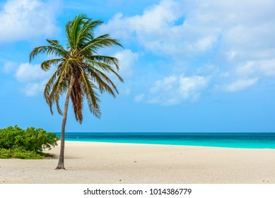 Palm tree on the idyllic white sand of Eagle Beach in Aruba. Caribbean seascape.