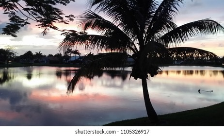 Palm Tree on the lake at sunset in a West Boca Raton, Fla subdivision