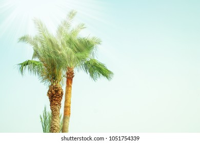palm tree on the nature by the sea pool background