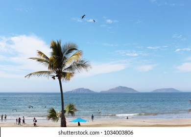 Palm tree on Pacific Ocean beach with tourists, beachgoers, small mountains, two birds, and blue sky in background. Palm trees, including coconut and date palms are in the Arecaceae botanical family.