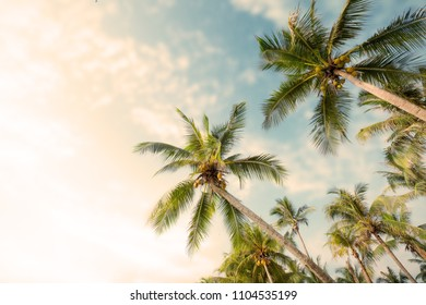 Palm tree on tropical beach with blue sky and sunlight in summer, uprisen angle. vintage instagram filter effect