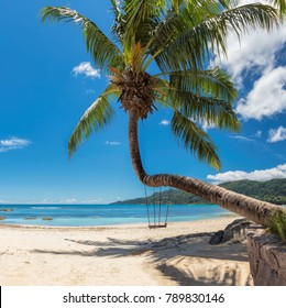 Palm tree on tropical beach in Seychelles, Mahe island.