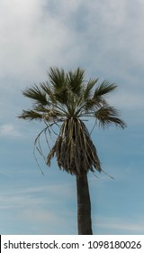 A palm tree on Venice Beach in the wind.