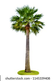 Palm tree on a white background.