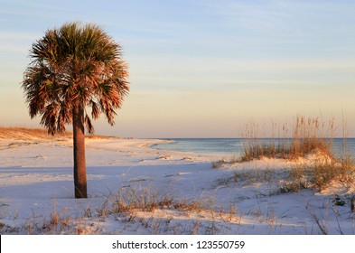 Palm Tree on White Sand Beach at Sunset
