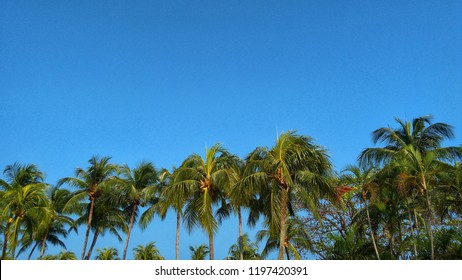 palm tree over beautiful tropic skyblue at the beach in Malaysia