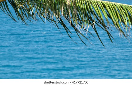 Palm tree over sea background. Natural frame from palm tree leaves
