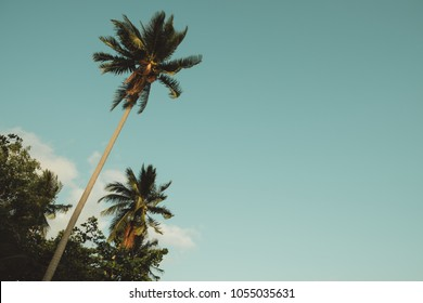 Palm tree over sky background.