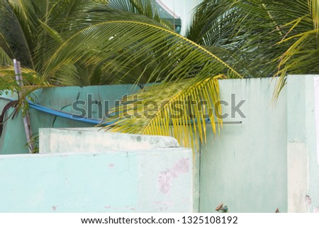 A palm tree over