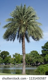 palm tree in park with blue sky.