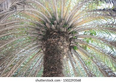 Palm tree patterns, beach, Antigua