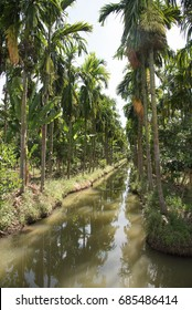 Palm tree plant between canal