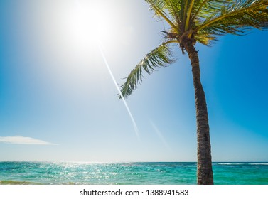 Palm tree in Raisins Clairs beach in Guadeloupe on a sunny day, French west indies. Lesser Antilles, Caribbean sea