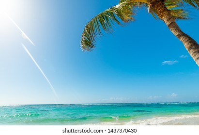 Palm tree in Raisins Clairs beach in Guadeloupe, French west indies. Lesser Antilles, Caribbean sea