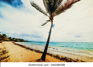 Palm tree in Raisins Clairs beach in Guadeloupe, French west indies. Lesser Antilles, Caribbean sea. Vintage tone effect