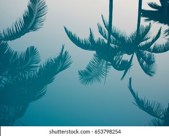 Palm tree reflection in water.