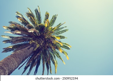 Palm tree in retro style, Orange county, California.