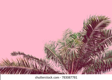 Palm tree retro toned. Vintage background. Travel card. Soft focus