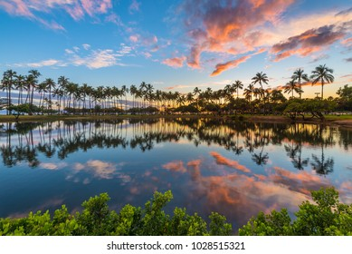 palm tree row at sunset - colorful clouds and palm trees are reflecting into the lagoon at Ala Moana Beach Park in Honolulu Hawaii Oahu