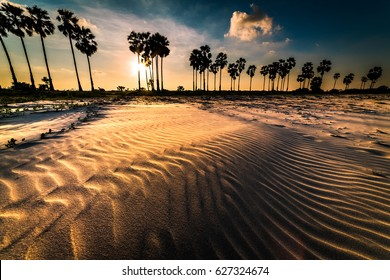 Palm tree and sand dunes
