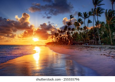 Palm tree sandy beach sunrise