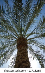 Palm tree seen from underneath
