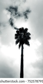Palm tree set against a cloudy sky