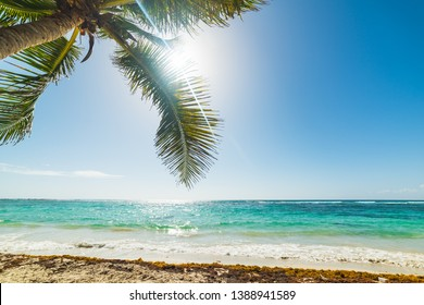 Palm tree and shining sun in Raisins Clairs beach in Guadeloupe, French west indies. Lesser Antilles, Caribbean sea