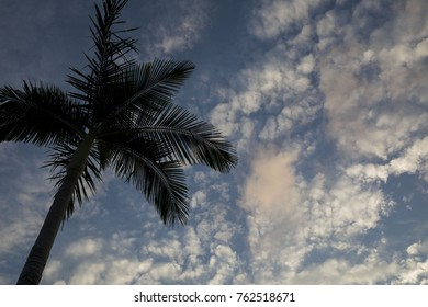 Palm tree silhouette against cloudy sky