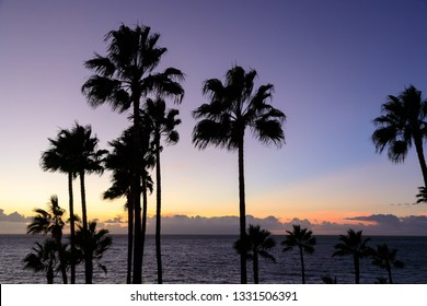 Palm tree silhouette against the setting sun on a tropical island.  The sky is deep indigo with a line of sunlit cloud on the horizon