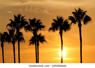 Palm tree silhouette in beautiful sunset, Orange County, CA