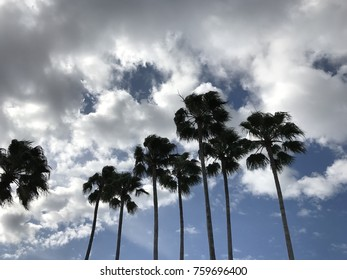 Palm tree silhouette with blue sky and cloud background