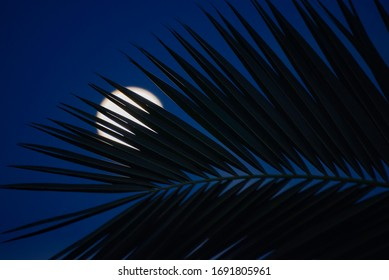 palm tree silhouette and the moon behind. Dark blue abstract background