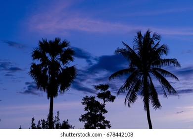 palm tree silhouette nature background