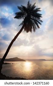 Palm tree silhouette near the ocean at cloudy blue sky in Gokarna, Karnataka, India