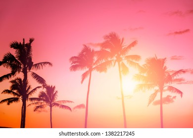 Palm tree silhouette on a background of tropical sunset