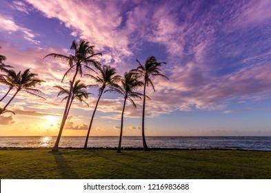 Palm tree silhouette on a beach during sunset on Kauai, Hawaii, USA