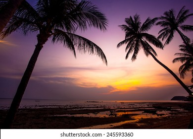 Palm tree silhouette on sunset tropical beach. Thailand