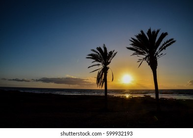 Palm Tree Silhouette at Sunset in Canary Islands