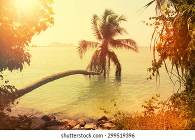 Palm tree silhouette at tropical coast of Thailand, vintage toned and film stylized