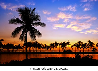 Palm tree silhouettes in Hawaii