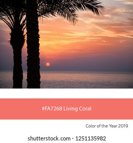 Palm tree silhouettes at sunrise as an example of the trend colour of the year 2019, Living Coral, with corresponding colour hex code.