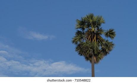 Palm tree and sky